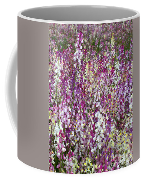 Flowers Coffee Mug featuring the photograph Field Of Multi-colored Flowers by Carol Groenen