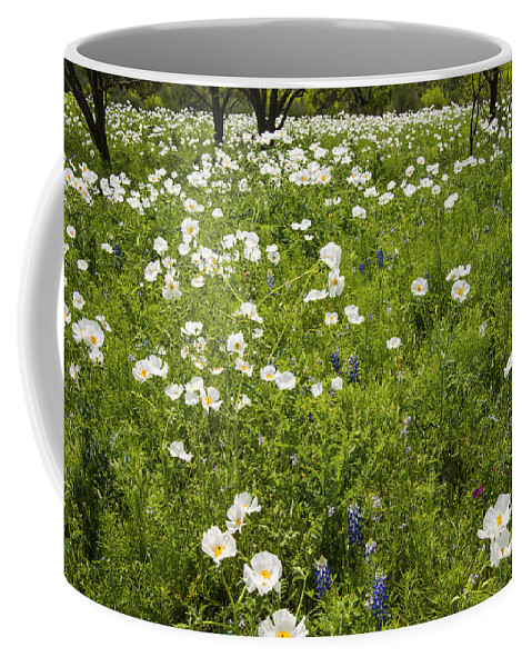 Fredericksburg Texas White Poppy Poppies Grass Grasses Tree Trees Landscape Landscapes Bloom Blooms Flower Flowers Spring Hill Country Coffee Mug featuring the photograph Field Of White Poppies by Bob Phillips