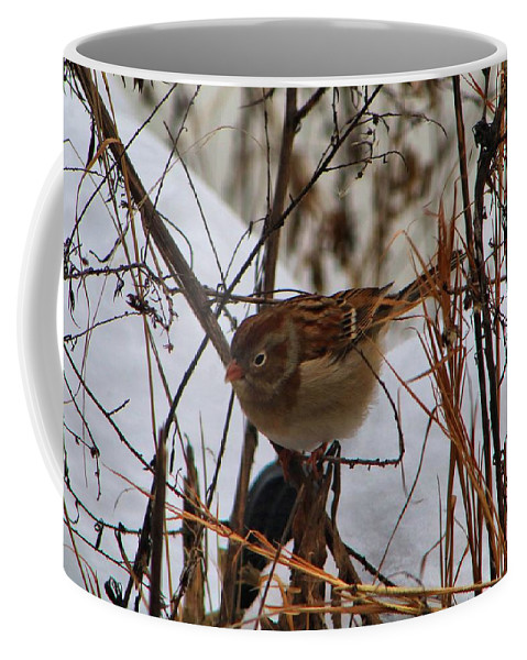 Bird Coffee Mug featuring the photograph Field Sparrow by Kathryn Meyer