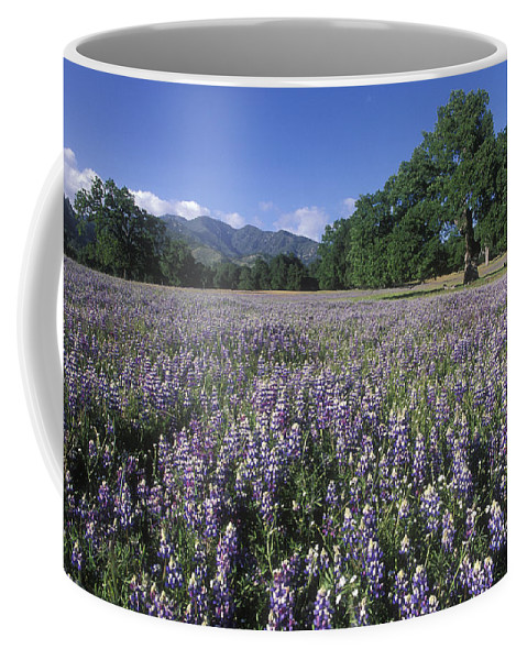 Lupine Coffee Mug featuring the photograph Fields Of Lupine And Owl Clover by Rich Reid