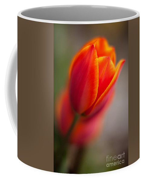 Tulip Coffee Mug featuring the photograph Fiery Tulip by Mike Reid