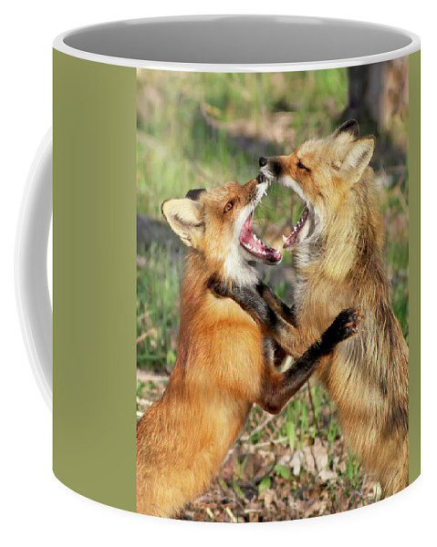 Fox Coffee Mug featuring the photograph Fight Club II by Mircea Costina Photography