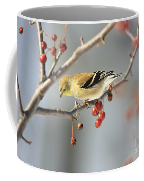 Finch Coffee Mug featuring the photograph Finch Eyeing Seeds by Deborah Benoit