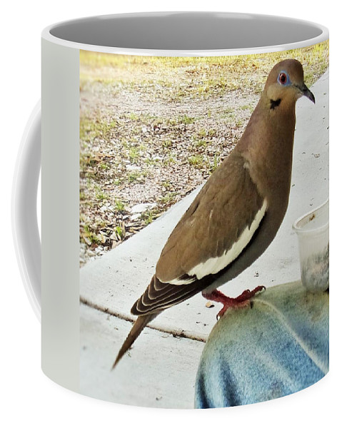 White Wing Dove Coffee Mug featuring the photograph Finish Your Seeds And We'll Go Flying by Michael Dillon