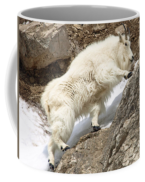 Animals Coffee Mug featuring the photograph Firm Footing by DeeLon Merritt