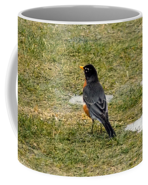 Robin Coffee Mug featuring the photograph First Robin Of Spring by William Tasker