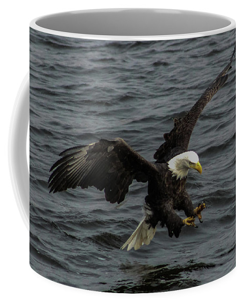 Bald Eagle Coffee Mug featuring the photograph Fish Hooks by Timothy Dohse