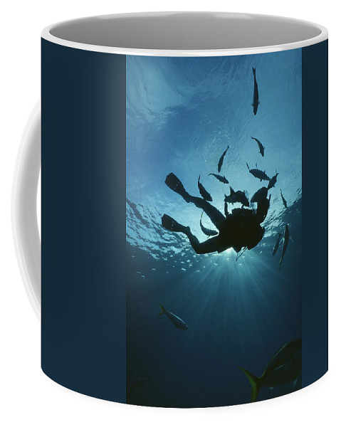 Animal Behavior Coffee Mug featuring the photograph Fish Swim Around A Diver In The Cayman by Raul Touzon