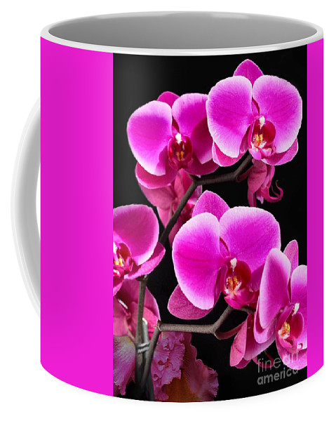 Orchids Coffee Mug featuring the photograph Five Orchids by Michael Knight