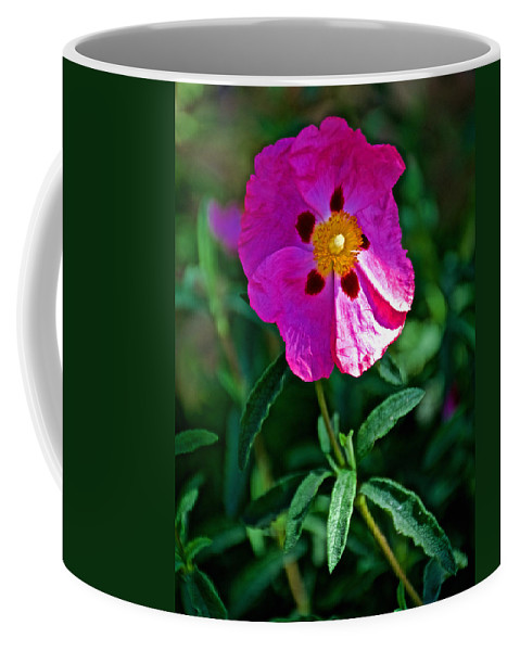 Orchid Rock Rose  At Pilgrim Place In Claremont Coffee Mug featuring the photograph Orchid Rock Rose At Pilgrim Place In Claremont-california by Ruth Hager