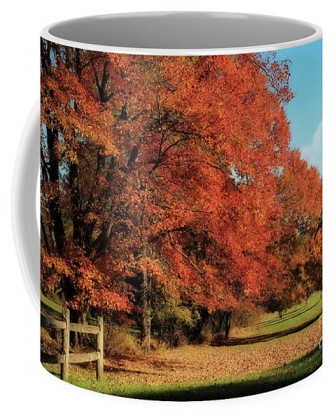 Autumn Coffee Mug featuring the photograph Flame Trees by Lois Bryan