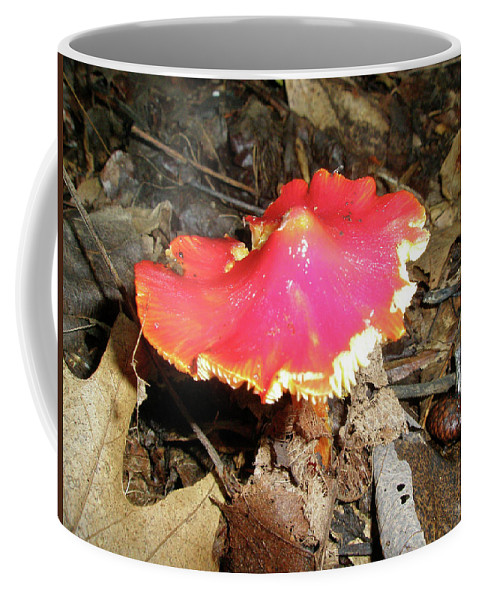 Mushroom Coffee Mug featuring the photograph Flamenco Mushroom In Red by Mother Nature
