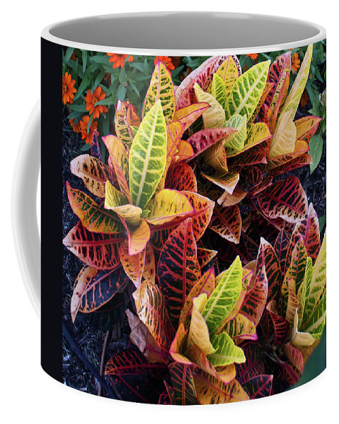 Flames Coffee Mug featuring the photograph Flames Of Delight by Douglas Barnett
