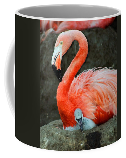 Bird Coffee Mug featuring the photograph Flamingo And Baby by Anthony Jones