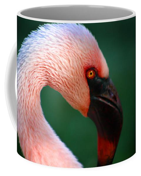 Flamingo Coffee Mug featuring the photograph Flamingo by Anthony Jones