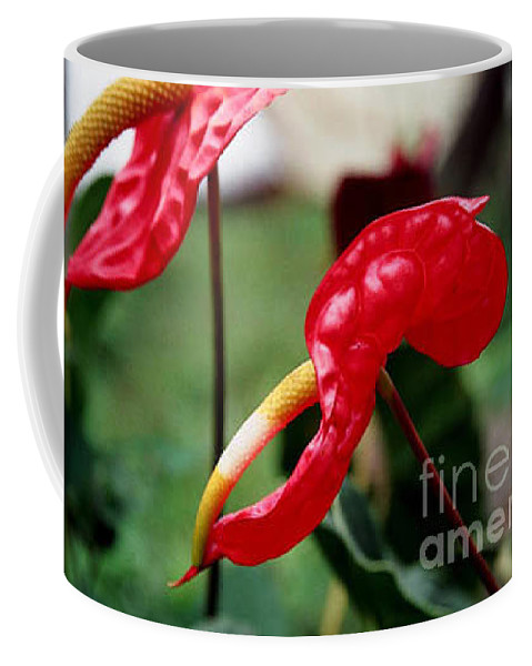 Exotic Flowers Coffee Mug featuring the photograph Flamingo Flower by Kathy McClure