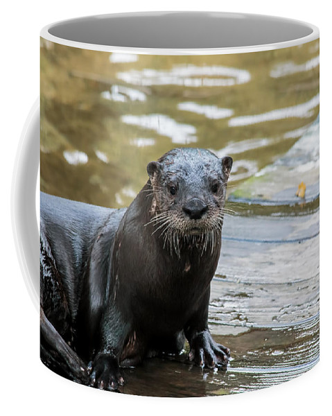 Florida Coffee Mug featuring the photograph Flamingo Gardens - Curious Otter by Ronald Reid