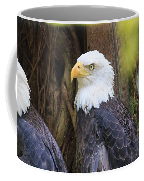 Florida Coffee Mug featuring the photograph Flamingo Gardens - Focused Bald Eagle by Ronald Reid