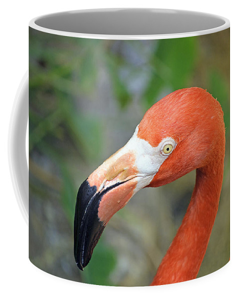 Flamingo Coffee Mug featuring the photograph Flamingo by Kenneth Albin