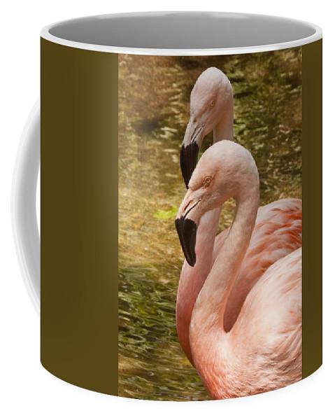 Flamingo Coffee Mug featuring the photograph Flamingo by Steven Natanson