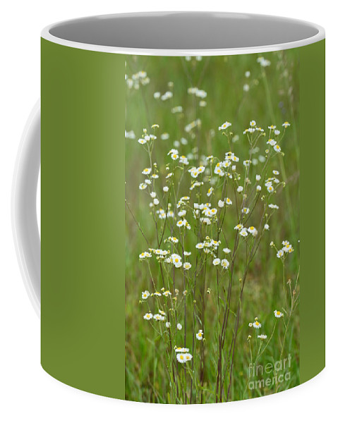 Fleabane In The Meadow Coffee Mug featuring the photograph Fleabane In The Meadow by Maria Urso
