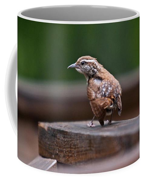 Cumberand Coffee Mug featuring the photograph Fledgling Wren 1 by Douglas Barnett