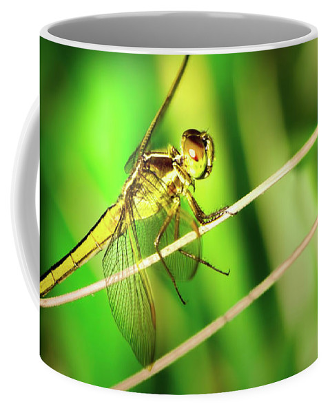 Dragonfly Coffee Mug featuring the photograph Flight Clearance by Mark Andrew Thomas