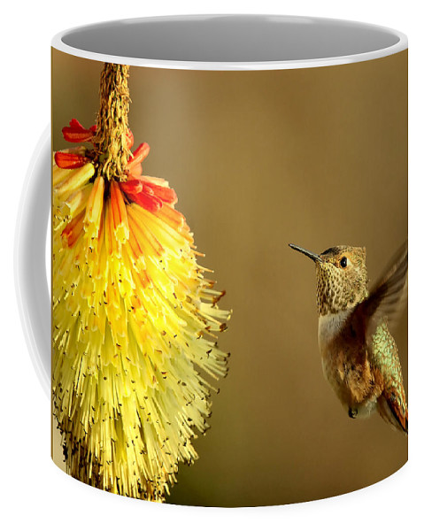 Hummingbird Coffee Mug featuring the photograph Flight Of The Hummer by Mike Dawson