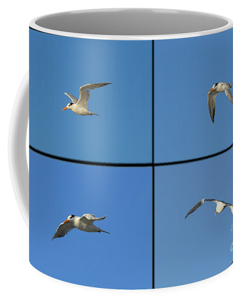 Royal Tern Coffee Mug featuring the photograph Flight Of The Tern Collage by William Tasker
