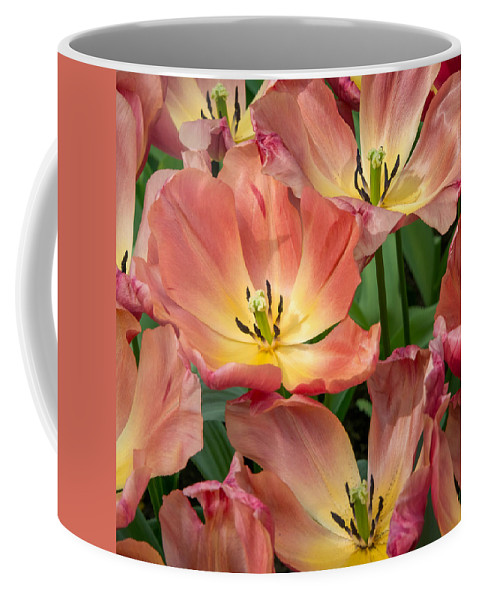 Holland Coffee Mug featuring the photograph Flighty Tulips by Cheryl Schneider