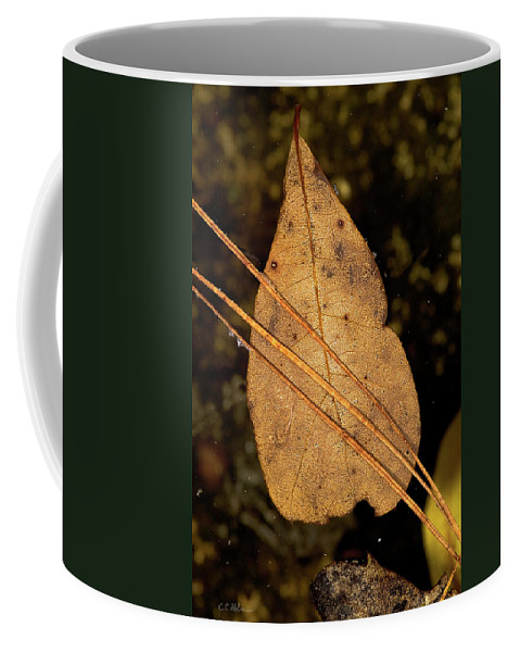 Leaf Coffee Mug featuring the photograph Floating by Christopher Holmes