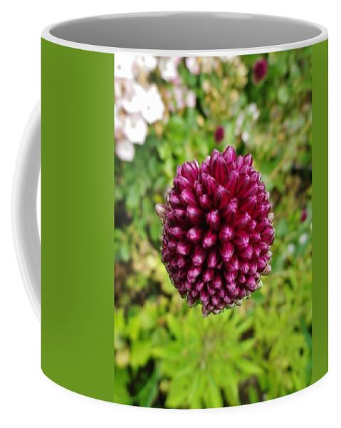 Allium Sphaerocephalon Coffee Mug featuring the photograph Floating Flower Buds Orb by Richard Brookes