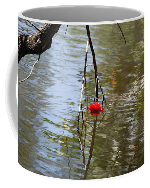 Water Coffee Mug featuring the photograph Floating Flower by Rob Hans