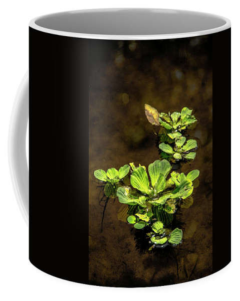 Floating Coffee Mug featuring the photograph Floating by Michael Frizzell