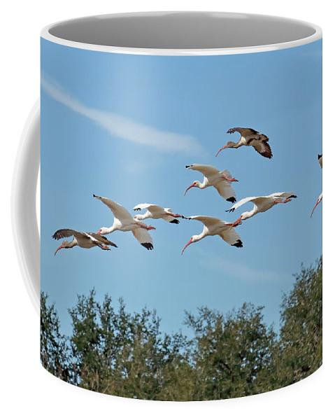 Bird Coffee Mug featuring the photograph Flock Of White Ibises by Daniel Caracappa