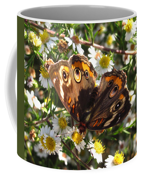 Floral Butterfly Prints Floral Butterfly Images Buckeye Butterfly Prints Buckeye Butterfly Flower Prints Butterfly Flower Pics Butterfly Flower Photos Maryland Butterfly Images Common Buckeye Images Entomology Biodiversity Preservation Meadow Ecosystem Field Ecology Nature Colorful Critter Prints Wild Flora Wildflower Prints Native Flora Maryland Flora Coffee Mug featuring the photograph Floral Buckeye by Joshua Bales