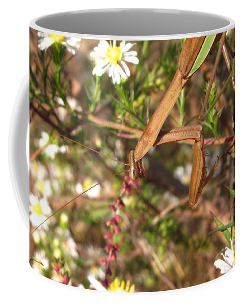 Praying Mantis Images Wild Flower Prints Entomology Savage Garden Biodiversity Preservation Meadow Ecosystem Natural Ecology Predatory Insects Maryland Mantis Brown Mantis Floral Mantis Coffee Mug featuring the photograph Floral Mantis by Joshua Bales