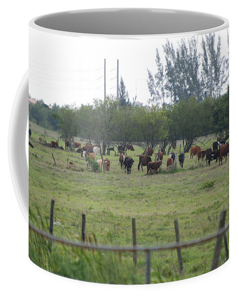 Trees Coffee Mug featuring the photograph Florida Ranch by Rob Hans