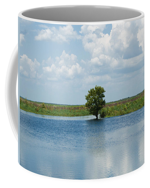 Florida; River; St; Johns; Saint; John; Flow; Flows; North; South Direction; Flowing; Current; Backw Coffee Mug featuring the photograph Florida River Backwater by Allan Hughes