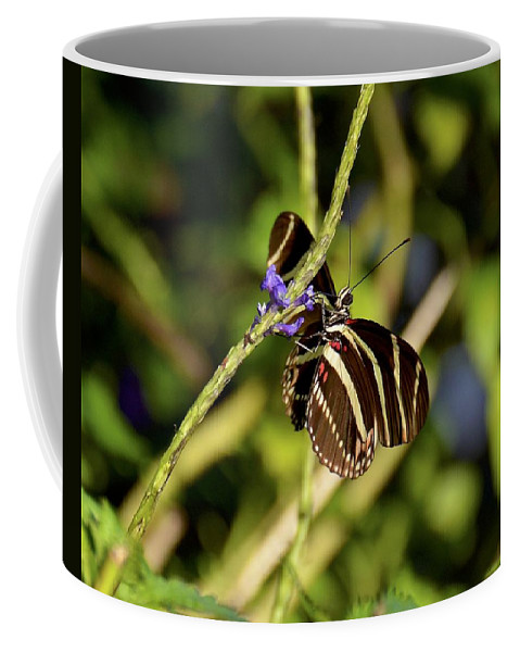 Butterfly Coffee Mug featuring the photograph Florida State Butterfly by Carol Bradley
