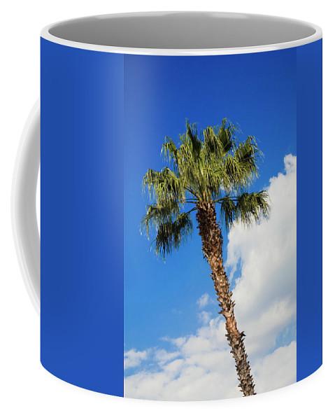 Florida State Tree Coffee Mug featuring the photograph Florida State Tree by Diane Macdonald