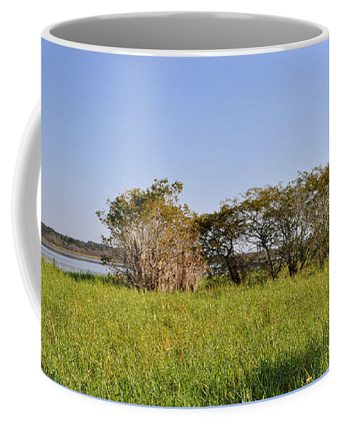 Knapko Coffee Mug featuring the photograph Florida Wetlands Panoramic by John Knapko