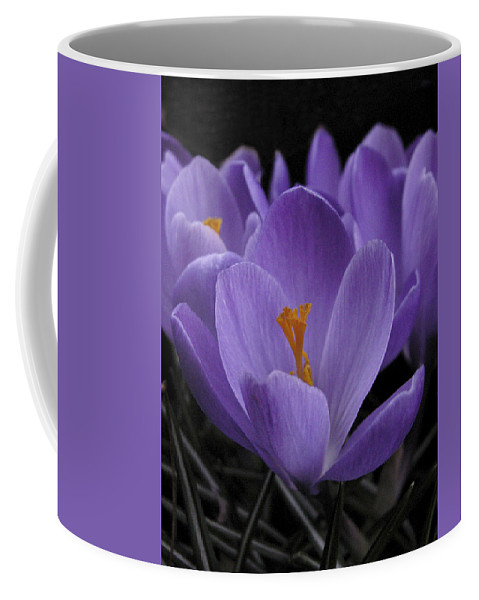 Flowers Coffee Mug featuring the photograph Flower Crocus by Nancy Griswold