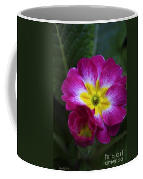 Flower Coffee Mug featuring the photograph Flower In Spring by Deborah Benoit