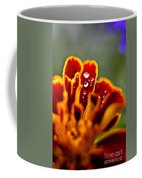 Rain Drops Coffee Mug featuring the photograph Flower Rain Drops by Sven Brogren