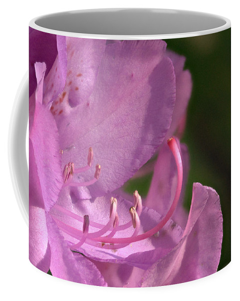 Flower Coffee Mug featuring the photograph Flower With Pistil And Stamens Displayed by Douglas Barnett