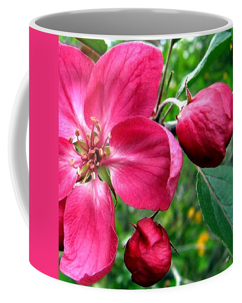 Flowering Crab Apple Coffee Mug featuring the photograph Flowering Crab Apple by Will Borden