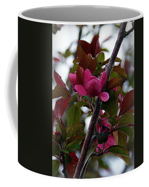 Flowers Coffee Mug featuring the photograph Flowering Crabapple by Cricket Hackmann