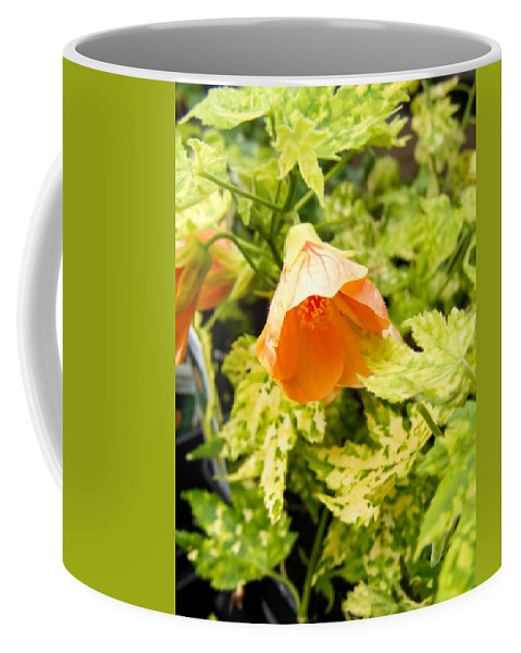 Flowering Maple Coffee Mug featuring the photograph Flowering Maple by Cynthia Woods