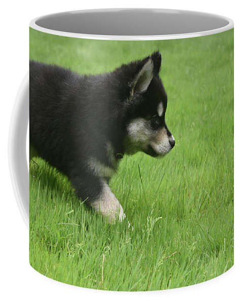 Alusky Coffee Mug featuring the photograph Fluffy Alusky Puppy Stalking In Green Grass by DejaVu Designs